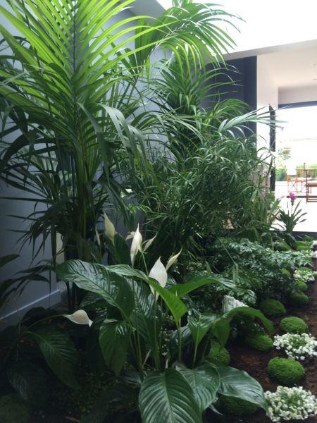 Am nagement d 39 un jardin et d 39 un patio sur la bouscat ducos paysages - Amenagement d un jardin ...